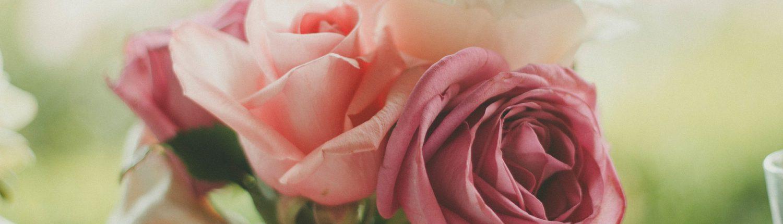 roses-983972_1920
